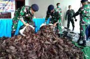 4 Warga Papua Nugini Ditangkap, Ketahuan Selundupkan 1 Ton Vanili ke Jayapura