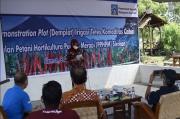 Terapkan Inovasi Irigasi Tetes, Produksi Cabai di Sleman Capai 1 Ton Per Hektar