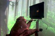 Impikan Manusia Cyborg, Elon Musk Uji Coba Chip ke Otak Monyet