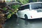 Pohon Besar Tumbang di Keboyaran Lama, Mobil Mewah Berwarna Putih Ini Ringsek