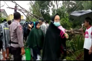 Ibu-ibu di Tasikmalaya Histeris Mobil Angkot yang Ditumpanginya Tertimpa Pohon Tumbang