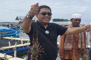 Kadin Sebut Pembudi Daya Lobster Perlu Pendampingan Akses Permodalan