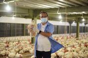 Sekolah Vokasi IPB University Panen Perdana Ayam Berteknologi Closed House
