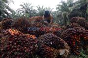 Sigap Terapkan Prokes, Industri Sawit Mampu Bertahan di Tengah Pandemi