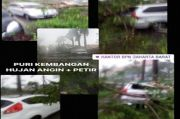 Hujan Angin, Sejumlah Pohon di Jakarta Bertumbangan