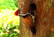 Renungan: Memeluk Dunia, Belajar dari Burung Pelatuk