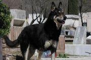 Rumpin Bogor Geger, Anjing Ini Terus Menggonggong Ingin Beritahu Majikannya Meninggal