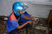Aksi Heroik Damkar Kuningan Selamatkan Anak Kucing di Gorong-gorong