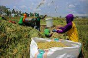 Perum Bulog Andil Topang Sulsel Jadi Penyangga Pangan Nasional