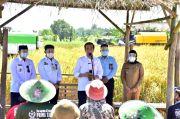 Presiden Senang, Panen Raya Padi di Indramayu Hasilnya Memuaskan