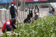 Pemprov DKI Targetkan Penanaman 200.000 Pohon Baru pada 2022