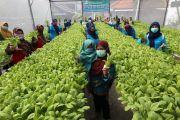 Jaringan Alumni Belanda Siapkan Hadiah 5.000 Euro Bagi Pembuat Perubahan di Bidang Pertanian
