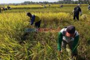 Dituding Intimidasi Petani Blitar untuk Proyek Greenfields, Ini Jawaban Perusahaan Perkebunan