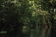 Misteri Hutan di Kutai Kartanegara, Bicara Sembarangan Bisa Tersesat dan Hilang
