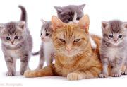 Semasa di Dunia Disiksa, Kucing Memburu Perempuan Ini di Neraka