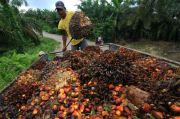 Program Peremajaan Sawit Rakyat Kurangi Risiko Pembukaan Lahan Ilegal