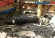 Polisi Segera Periksa 7 Orang yang Terlibat Babi Ngepet Palsu di Depok