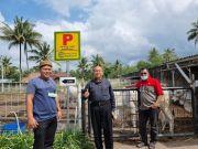 Dukung Ketahanan Pangan, Produksi Sapi Berkualitas Terus Dipacu