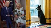 Seekor Kucing Pindah ke Gedung Putih setelah Anjing Biden Gigit Orang