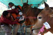 Jaga Pasokan Daging, Berdikari Order 2.212 Ton Daging Sapi Brasil