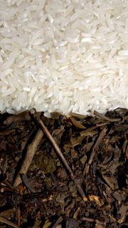 Jarang Diketahui, Ini Manfaat Menanak Nasi dengan Air Teh