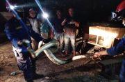 Bukan Sekadar Memadamkan Api, Petugas Damkar Juga Sigap Menolong Kucing dan Mengevakuasi Ular