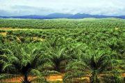 Musim Kemarau 2021 Diprediksi Normal, Produksi Sawit Bisa Capai 55,69 Juta Ton