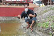 Ribuan Ikan di Kawasan Wisata Cemara Mendadak Mati