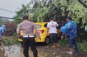 Pohon Tumbang Timpa Mobil Brio di Pamulang, Arus Lalu Lintas Terputus Seketika
