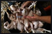 Merangkak Naik, Harga Ayam Potong Tembus Rp42.000 Perkilogram