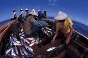 Maknyus! Ikan Kembung Indonesia Diekspor ke Thailand