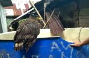 Tembak Burung Elang Dilindungi hingga Tak Bisa Terbang, Oknum Kades Diperiksa Polisi