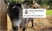 Mark Zuckerberg Pamer Kambing Kesayangan Bernama Bitcoin di Facebook