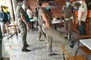 Arogan, Oknum Satpol PP Kota Singkawang Tendang Kursi Warung Kopi