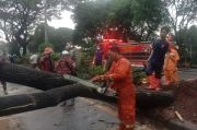 Hujan Angin Tumbangkan Pohon Besar di Depok, Akses Juanda-Margonda Terputus