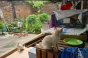 Disenggol Truk di Lubuklinggau, Ibu Penyayang Kucing Tewas Bersimbah Darah