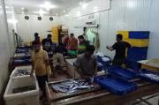 Pengiriman Ikan Segar dari Aceh ke Pulau Jawa Meningkat Selama Pandemi COVID-19