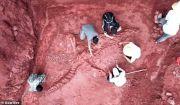 Temukan Lagi Fosil Dinosaurus, Kuatkan China sebagai Sarang Jurassic