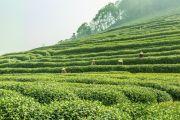 Sentuh Petani dengan Teknologi, Crowde Ikut Majukan Sektor Pertanian Indonesia