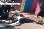 Diduga Kelelahan, Kuda Penarik Delman Ini Terkapar di Jalan Tangerang