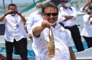 Menteri Sakti Penuhi Janji, Ekspor Benih Lobster Resmi Dilarang