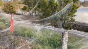 Fenomena Aneh, Jaring Laba-laba Selimuti Kota-kota Australia, Pertanda Apa?
