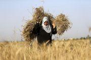 Israel Izinkan Ekspor Terbatas Produk Pertanian dari Gaza