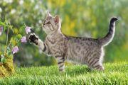 Perempuan yang Masuk Neraka karena Meyiksa Seekor Kucing
