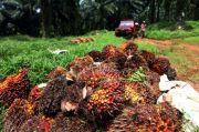 RI Disarankan Gandeng Malaysia untuk Stabilkan Harga Minyak Sawit