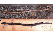 Tongkat Ular Milik Dukun dari 4.400 Tahun Lalu Ditemukan di Finlandia
