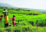 Petani Bali Didorong Ikut Asuransi Pertanian, Ini Alasannya