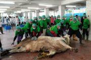 Dosen UGM Bagikan Tips Penyembelihan Hewan Kurban di Masa Pandemi