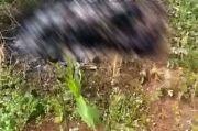 Kenali Mayat Terbakar di Cisauk, Batik Jogja Jadi Petunjuk Keluarga