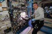 Dukung Kehidupan di Luar Angkasa, Astronot Tanam Cabai di ISS